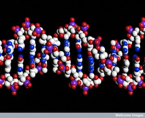 B0001854 DNA double helix
