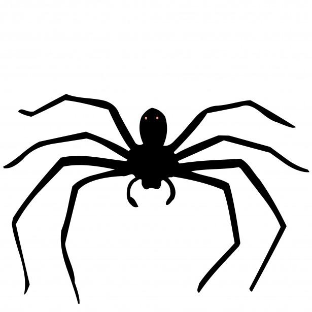 spider-1403889352yvk