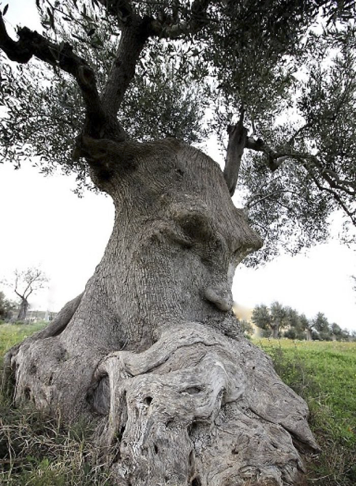 tree-with-face
