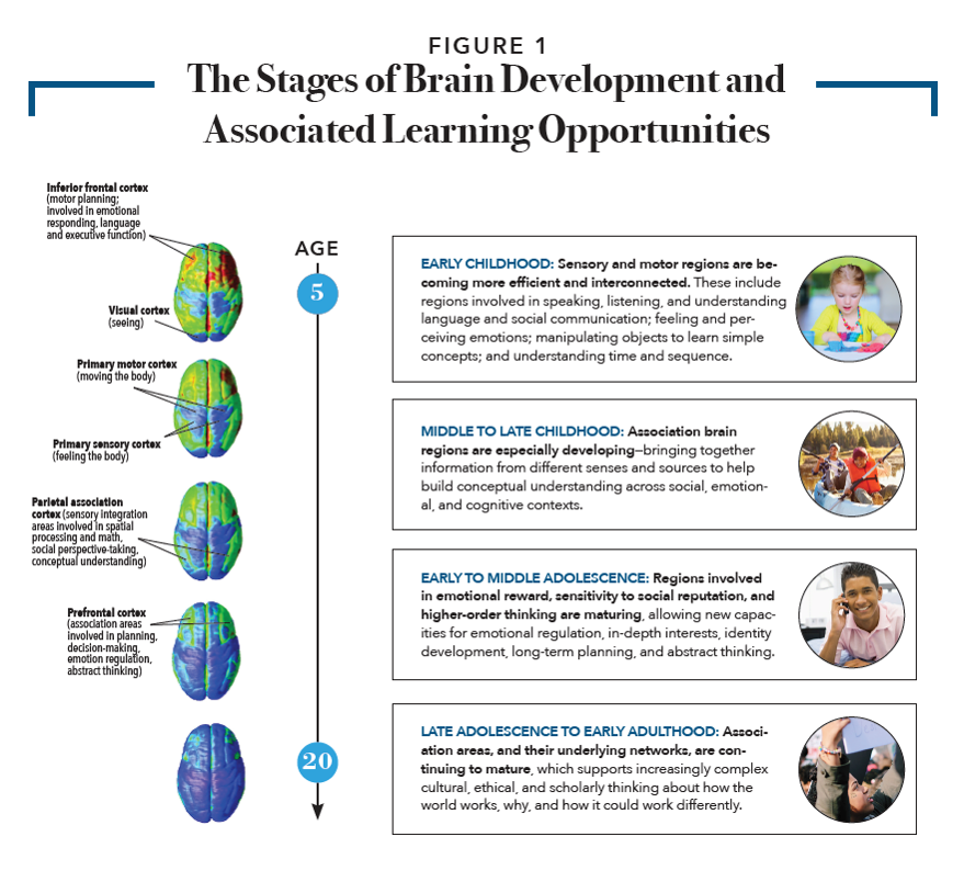 gd-talk-stages-of-brain-development